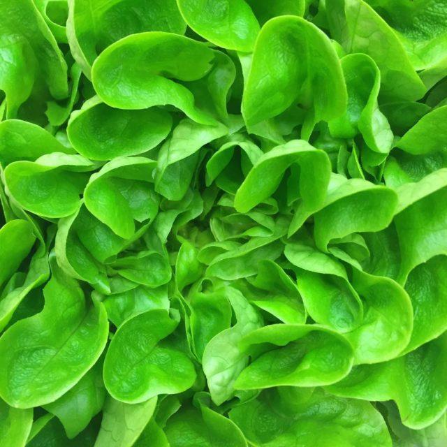 Ale pikna saata salat lettuce healthyfood vege vegetables green greendayhellip